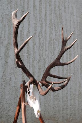 Somogyi Hármashatár Hunting Co. - Western Hungary