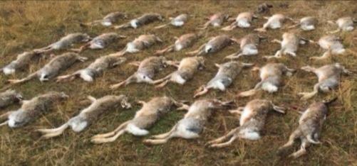 Szász Zsolt vadászatszervezés