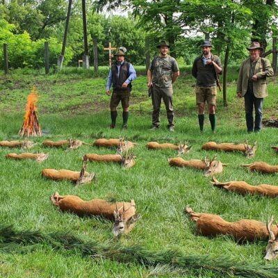 Őzbak vadászat Tápiószentmárton