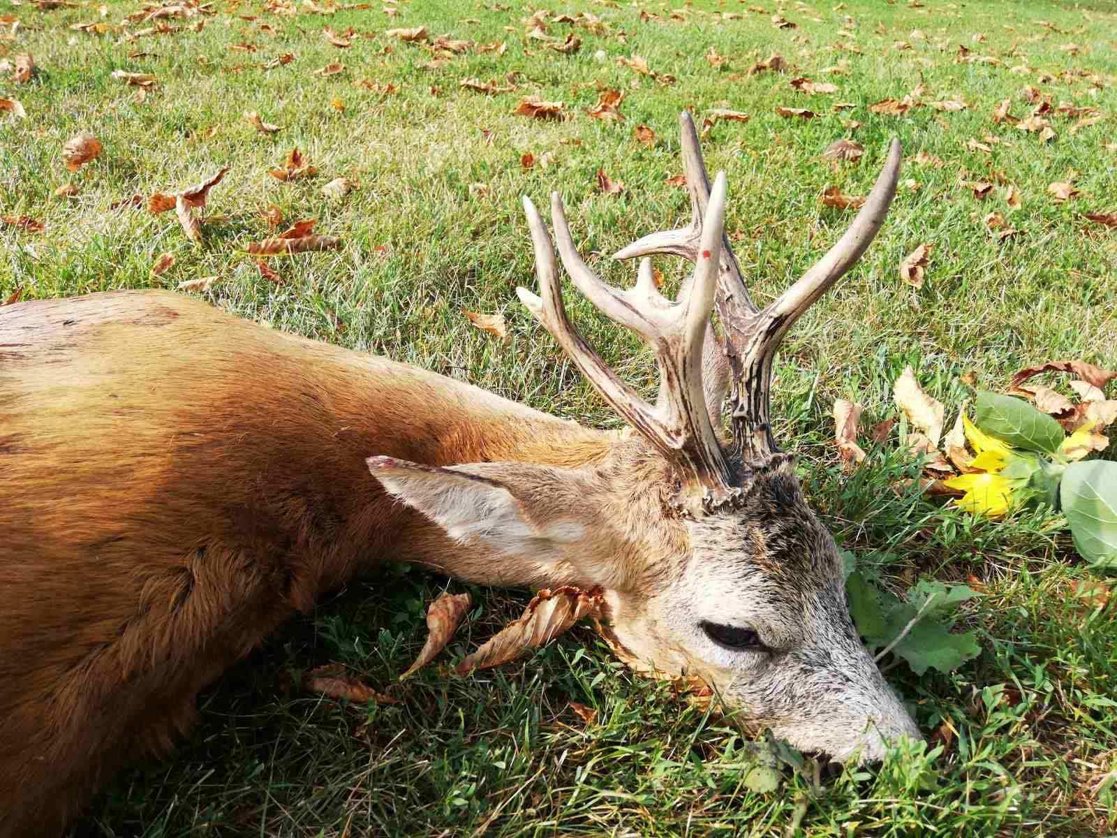 Újvilág Hunting company