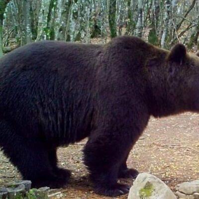 Medvevadászat Horvátországban, Plitvicei tavakhoz közel