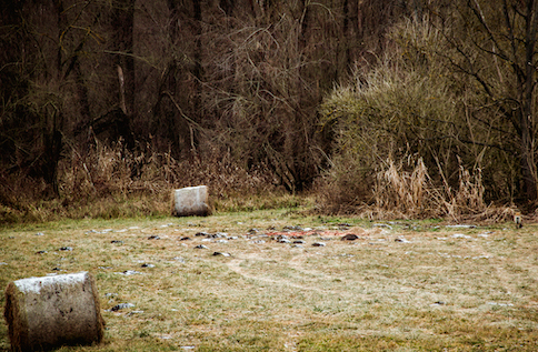 Vaddisznó vadászat a Tolna megyei dombok mögött – Szekszárd közelében