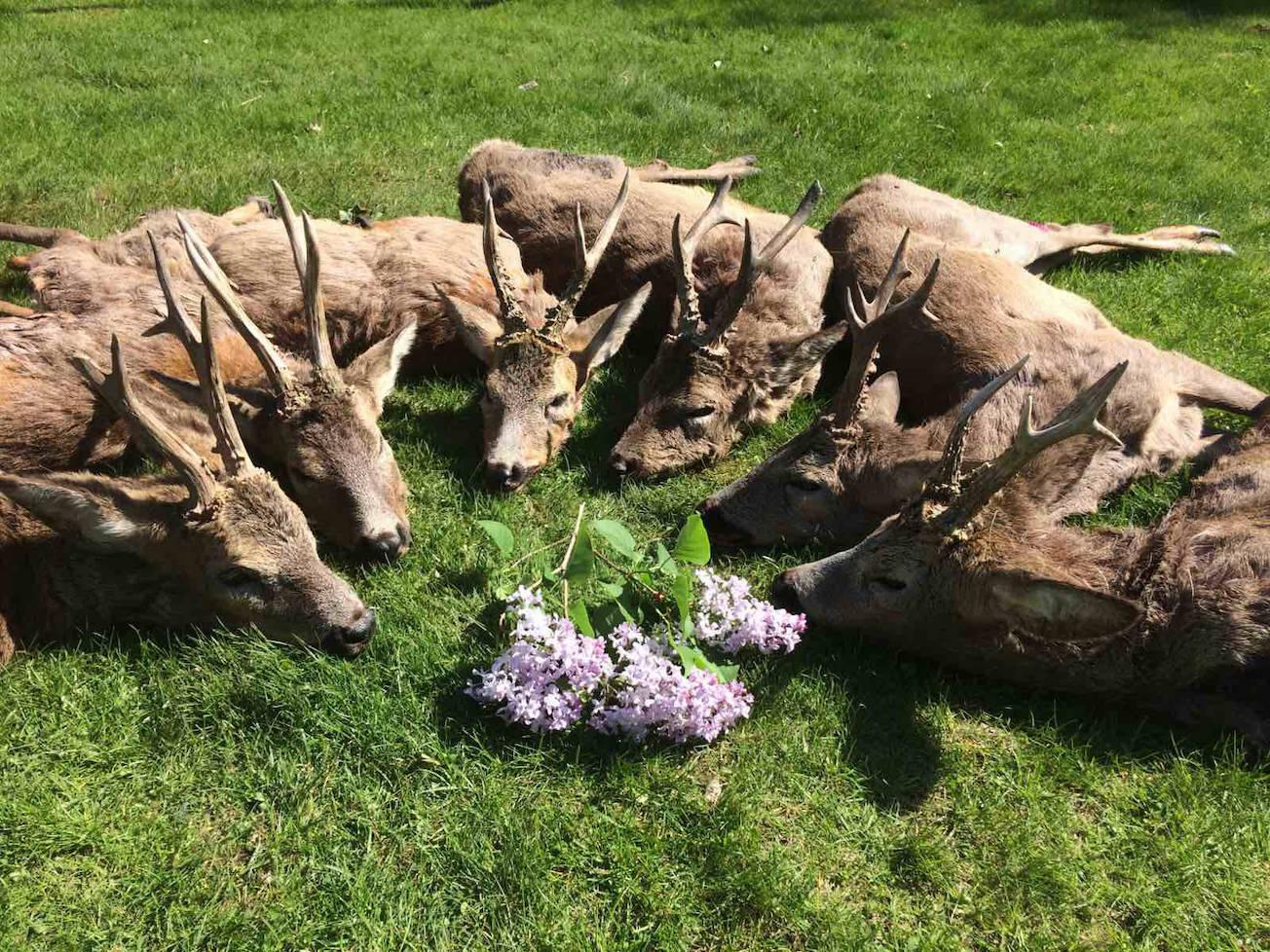 Őzbak (350gr felett) és őz tarvad vadászat