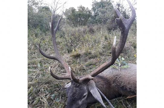 Gímszarvas vadászat Gyöngyös környékén