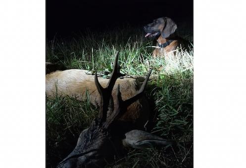 Őzbak vadászat