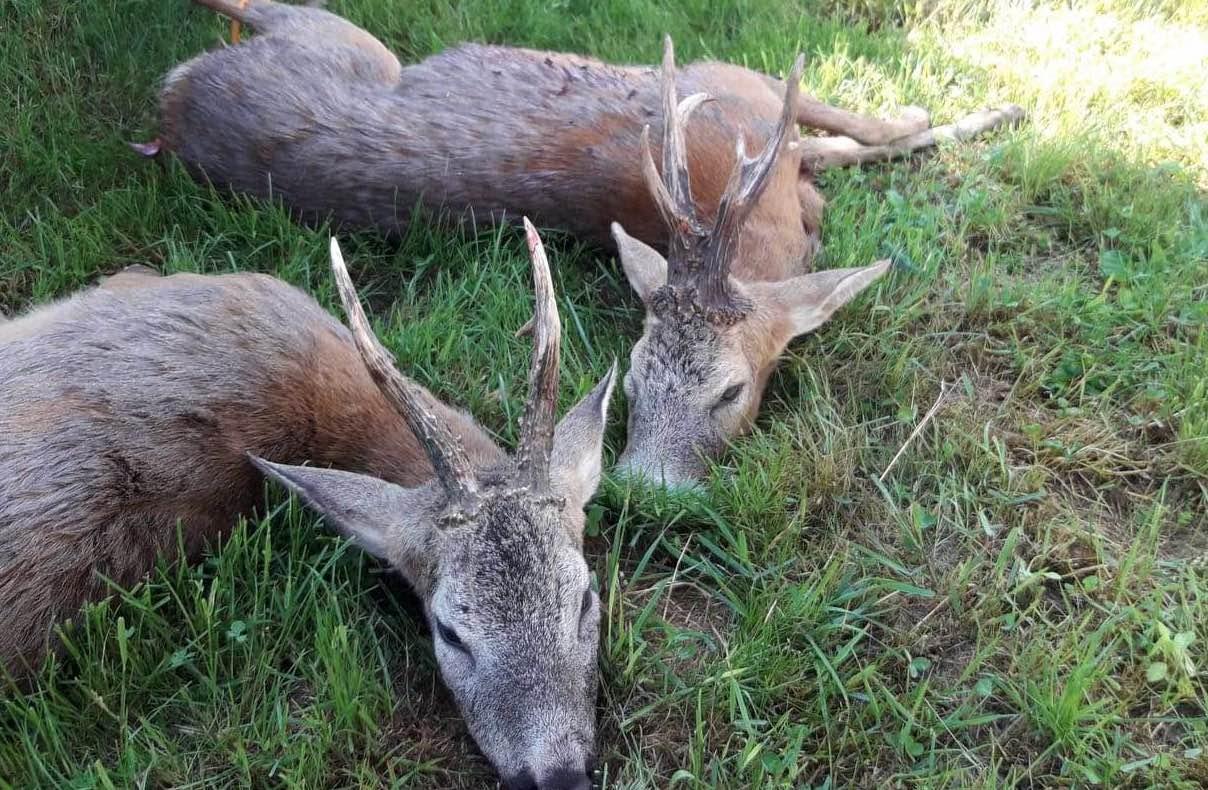 Őzbak vadászat Nagyszokolyon – Somogy megye