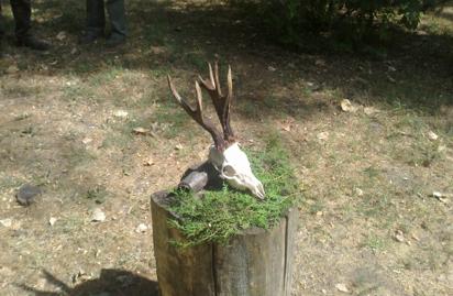 Őzbakok Heves megye déli területéről & vaddisznó, apróvad