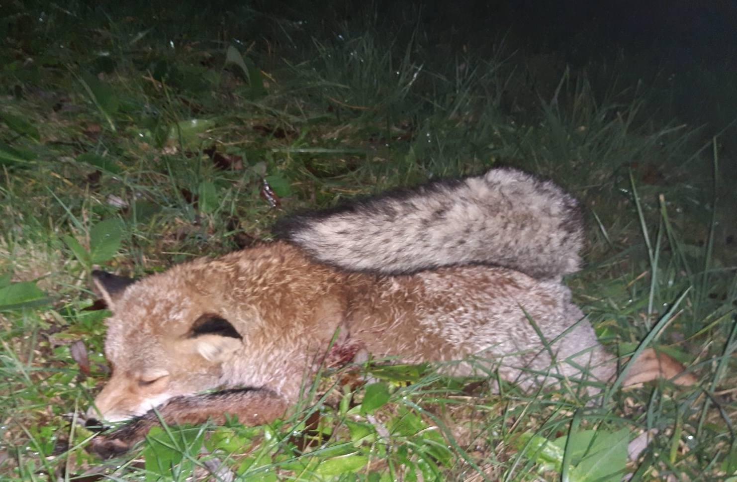 Vadkár és vaddisznó vadászat a mesés Szigetközben