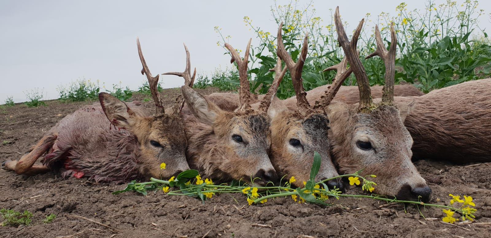 Nagyvad vadászat Romániában