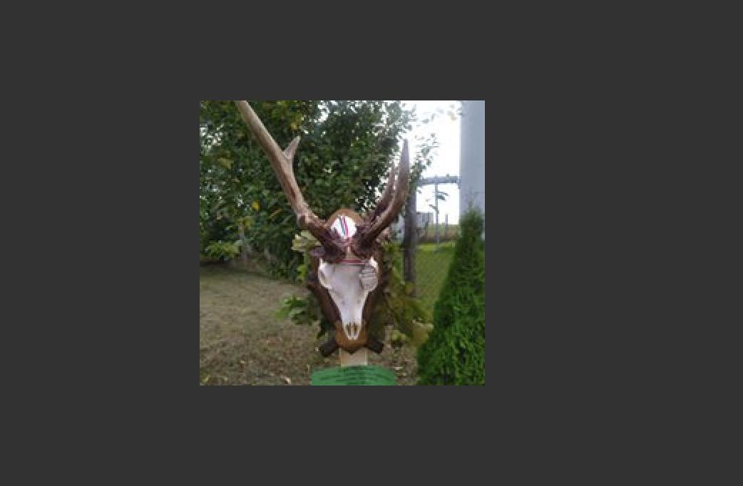 Őzbakvadászat barkácsolással, fogathajtással is, a Pest megyei Tápióbicskén