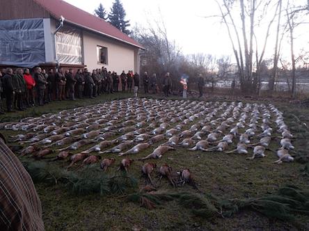 Mezei nyúl vadászat Solt környékén, Bács-Kiskun megye