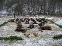 Terelő vadászat Zala megyében
