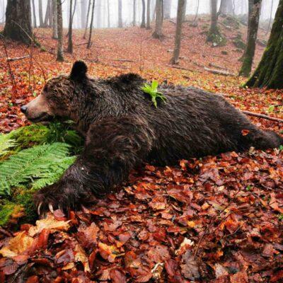 Medve és Farkas vadászat Szerbiában - elővétel.
