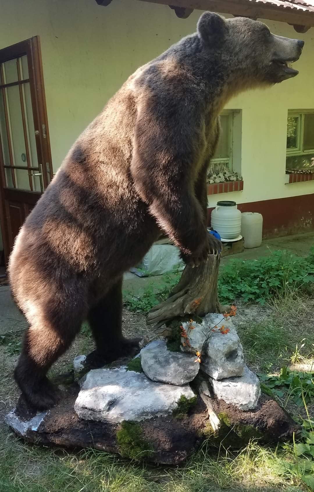 Medve és Farkas vadászat Szerbiában – elővétel.