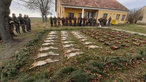 Apróvad vadászatok Csongrád megyében, 10-20 fős vadásztársaságok részére, egyéb programokkal.
